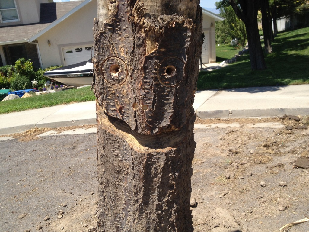 smiling tree stump
